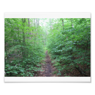 Rastro del bosque fotografias
