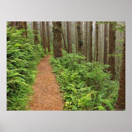 Rastro pacífico del bosque póster