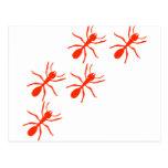 rastro rojo de la hormiga postales