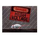 Rat high voltage sign on fence Postcard