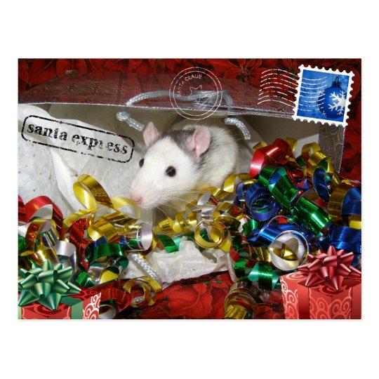 Rat in a bag Postcard