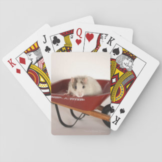 Rat Playing Cards