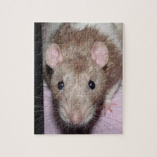 rat puzzle with tin
