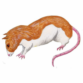 Rat sculpture - silver fawn berkshire rat