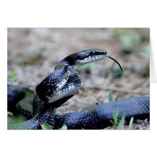 Rat Snake Hissing Card