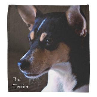 Rat Terrier Bandana