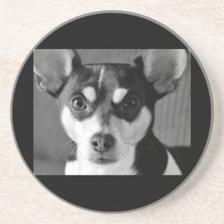Rat Terrier Black and White Coaster