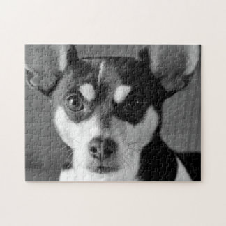 Rat Terrier, Black and White, Jigsaw Puzzle