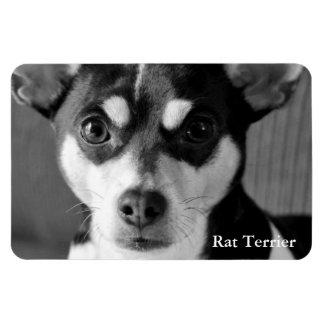 Rat Terrier, Black & White, Magnet