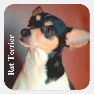 Rat Terrier Color, Text Square Sticker