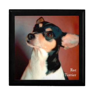 Rat Terrier Trinket Box
