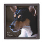 Rat Terrier Gift Box at Zazzle