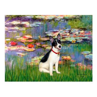 Rat Terrier - Lilies 2 Post Cards