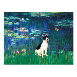 Rat Terrier - Lilies 5 Postcard