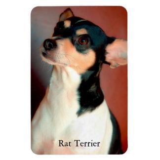 Rat Terrier Magnet