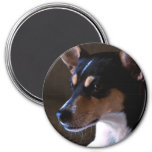 Rat Terrier Magnet 2, Color, Round 3 Inches