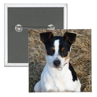 Rat Terrier Pinback Button