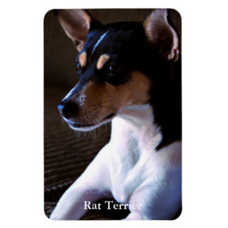 Rat Terrier Flexible Magnet