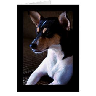 Rat Terrier v2 Card