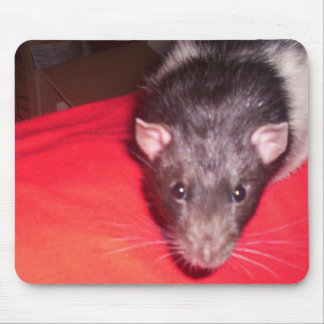 rat watching the mouse (pad) mousepads