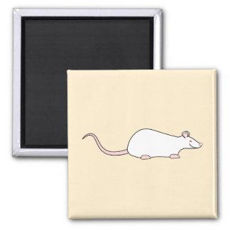Rata blanca del mascota del albino imán cuadrado