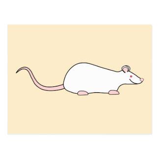 Rata blanca del mascota del albino postales