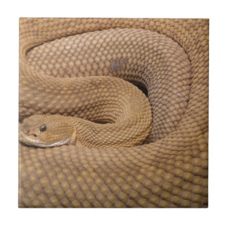 rata de la serpiente de cascabel del basilisco azulejos
