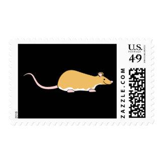 Rata del mascota. Canela Berkshire, vientre blanco Envio