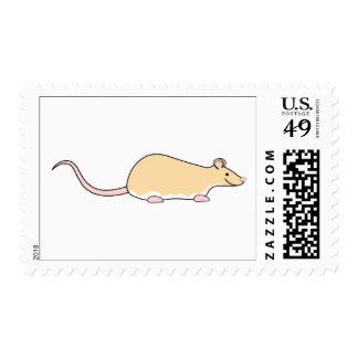 Rata del mascota. Cervatillo Berkshire, vientre Franqueo