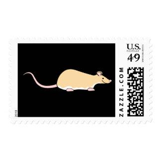 Rata del mascota. Cervatillo Berkshire, vientre Envio