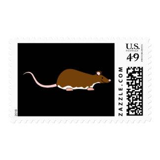 Rata del mascota de Brown. Berkshire, vientre Sellos