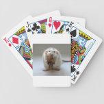 Rata linda que sostiene el peluche cartas de juego
