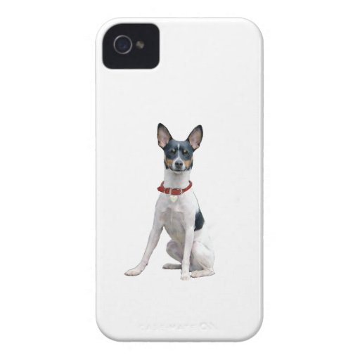 Rata Terrier (a) iPhone 4 Cárcasas