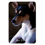 Rata Terrier Imán