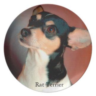 Rata Terrier Platos Para Fiestas