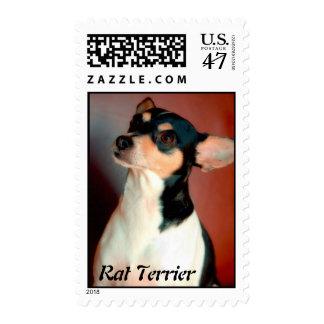 Rata Terrier Sello Postal