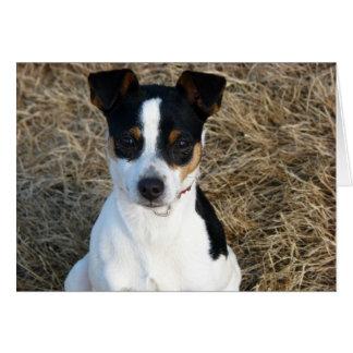 Rata Terrier Tarjeta De Felicitación
