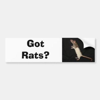 ¿Ratas conseguidas? ¿, Conseguido ratas? Pegatina Para Auto