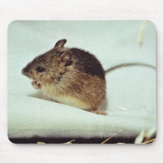Ratón de salto de prado de Prebles Tapetes De Raton