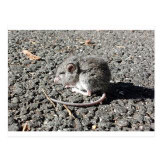 Ratón del bebé postal