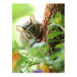Ratón en flores postal