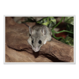 Ratón lindo, gris póster
