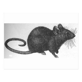 Ratón Postales