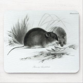 Ratón, Tierra del Fuego, Suramérica c.1832-36 Tapete De Raton