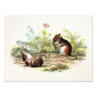 Ratones del ejemplo del ratón de cosecha de los 18 impresiones fotográficas