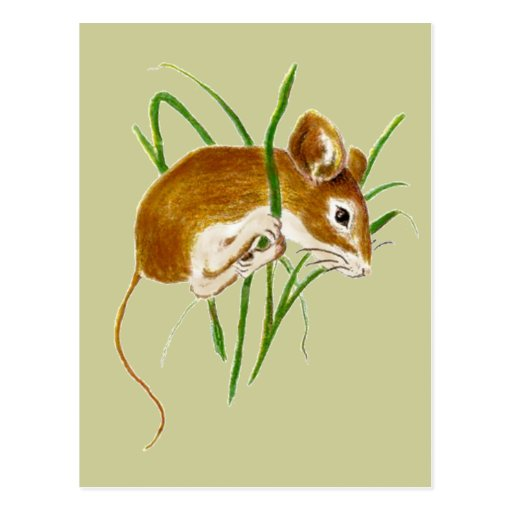 Ratones lindos, naturaleza animal de la acuarela d tarjeta postal