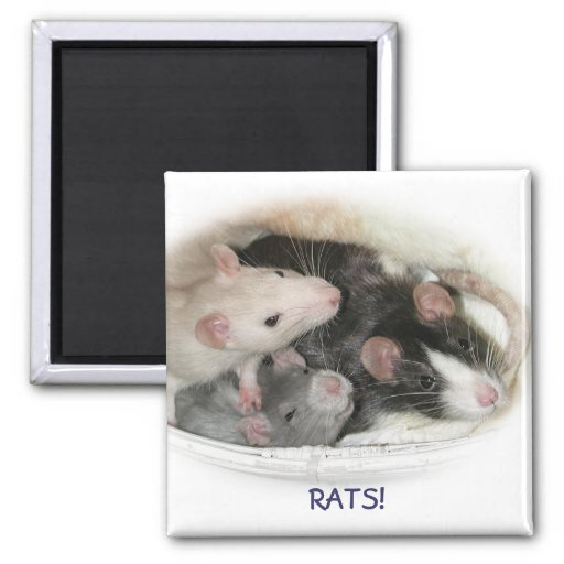 RATS! 2 INCH SQUARE MAGNET