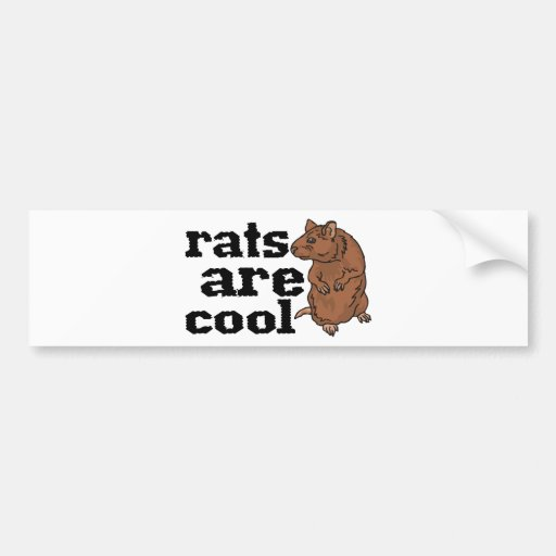 Rats Are Cool Bumper Stickers