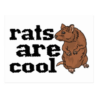 Rats Are Cool Postcards