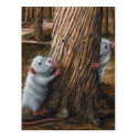 Rats by old tree hide and seek Postcard